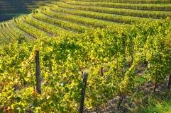 Établissement vinicole et vin Italie Image libre de droits