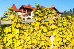 Établissement vinicole Gray Monk Images stock