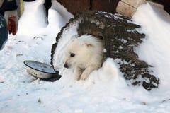 Établissements de chien Photos stock