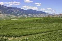 Établissements vinicoles Photographie stock libre de droits