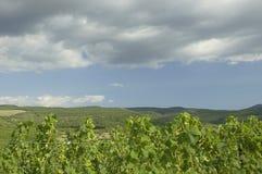 Établissements vinicoles en vallée. Images libres de droits
