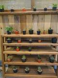 Étagère de cactus Images libres de droits