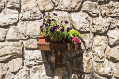 Étagère en bois de mur avec des vases de fleurs, allumés par le soleil, accroché au mur de la maison, construit de grandes pierre Photos libres de droits