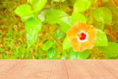 Étagères en bois supérieures vides et vert orange de feuille de fleur de ketmie frais dans la nature de jardin photo libre de droits