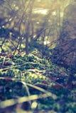 Étage de forêt Image stock