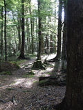 Étage de forêt de hêtre Images stock