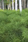 Étage vert de la forêt Images stock