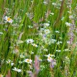 Étages de fleur Image libre de droits