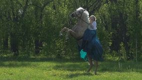 Étalon blanc dans la selle et le frein se tenant sur les jambes de derrière dans le pré Le cheval exécute un tour sur le commando banque de vidéos