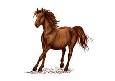 Étalon brun Arabe galopant sur des courses de cheval illustration de vecteur