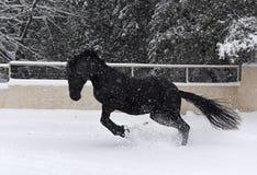 Étalon noir dans la neige photos stock