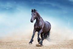 Étalon noir de frisian photos libres de droits