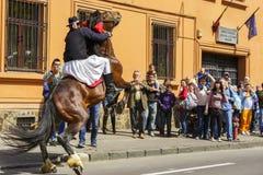 Étalon s'élevant avec le cavalier, Brasov, Roumanie Photographie stock libre de droits