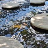 Étang à poissons circulaire Photographie stock