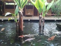 Étang à poissons de Koi Photos stock