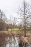 étang Photographie stock