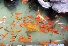 Banc de la natation de poisson rouge sous la surface de l for Poisson rouge artificiel