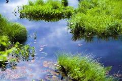 Étang avec l'herbe Photo libre de droits