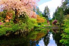 Étang avec le bel entourage fleurissant d'arbres de ressort photo stock