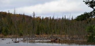 Étang avec les arbres morts en automne images libres de droits