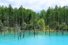 Étang bleu de Biei, le 29 juillet 2017 Hokkaido, Japon Image libre de droits