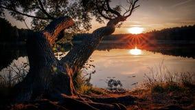 Étang d'arbre de coucher du soleil Image stock
