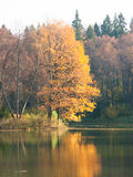 Étang d'automne Images libres de droits