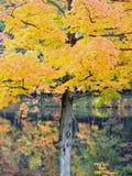 Étang d'automne Photo libre de droits
