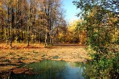 Étang d'automne. photographie stock libre de droits