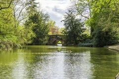 Étang d'eau clair entouré par des arbres en parc image stock