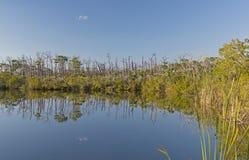 Étang d'eau douce dans les tropiques photographie stock