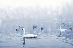 étang d'oiseaux Photo stock