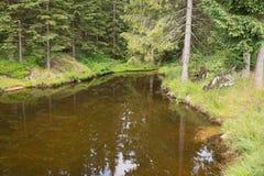 Étang dans le paysage de forêt Photographie stock libre de droits