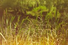 Étang de beauté dans la forêt profonde Image stock
