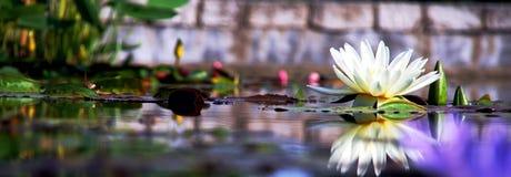 étang de fleur Photos stock