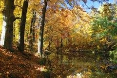 Étang de forêt d'automne Images libres de droits