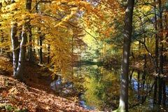 Étang de forêt d'automne Image libre de droits