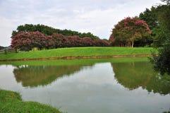 Étang de jardin Photographie stock