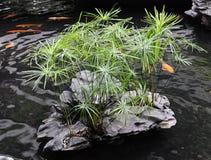 étang de jardin de Chinois-type Photos libres de droits