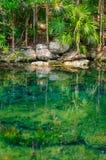 Étang de jungle photographie stock libre de droits