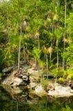 étang de jungle images stock