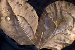 étang de lames d'automne Image stock
