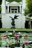 Étang de Lilly de l'eau dans le jardin Image libre de droits