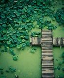Étang de Lotus Photos libres de droits