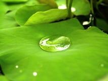 Étang de lotus image stock