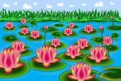 Étang de Lotus avec le ciel bleu et les nuages blancs Photographie stock libre de droits