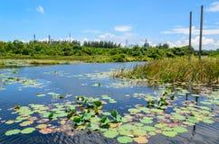 Étang de Lotus avec le fond de ciel bleu Photos stock