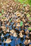 Étang de Lotus en automne Photos stock