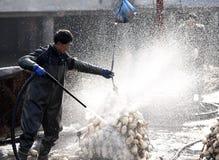 Étang de lotus de travailleurs migrants d'hiver pour gagner la monnaie métallique Photo stock