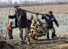 Étang de lotus de travailleurs migrants d'hiver pour gagner la monnaie métallique Photos libres de droits